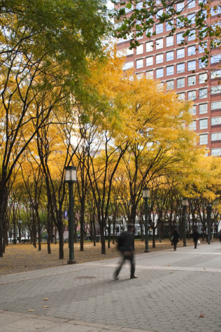 Metrotech Commons: Myrtle Promenade