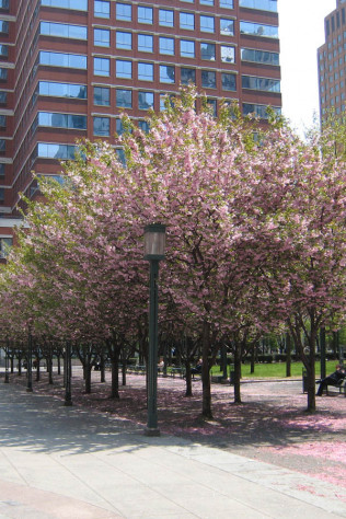 Metrotech Commons: Brooklyn Polytech